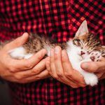 Selling Your Home? Is Your Listing 'Pet-Friendly'?