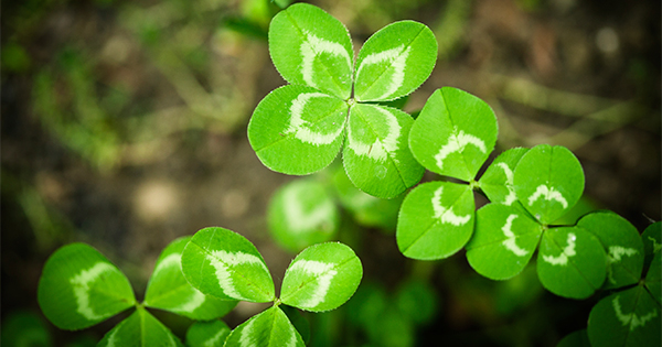 """Don't Let Your """"Luck"""" Run Out 
