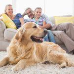 ¿Qué significa un hogar para usted?