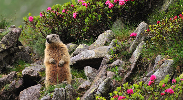 No Matter What the Groundhog Says, Here are 5 Reasons to Sell Before Spring!   Simplifying The Market