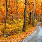 ¡4 razones para comprar una casa este otoño!