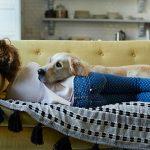 Porqué los hogares aptos para mascotas tienen demanda alta
